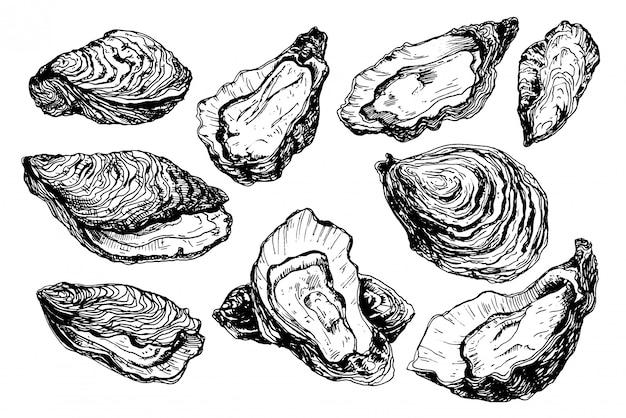 Conjunto de conchas de ostras