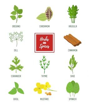 Conjunto de condimentos, hierbas vegetarianas, plantas aromáticas orgánicas.