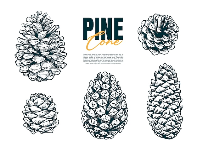 Conjunto de cono de pino dibujo a mano