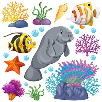 Conjunto de criaturas marinas y coral sobre fondo blanco.