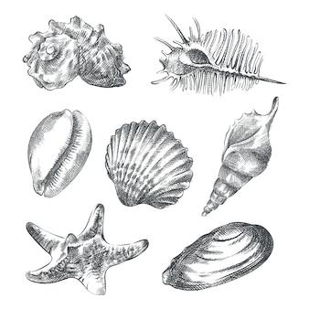 Conjunto de croquis dibujado a mano de diferentes conchas de mar. el juego incluye conchas de tritón y murex, conchas de cowrie, tulipán, estrella, natica y conchas de tun, bivalvos, telones y vieiras, conchas pequeñas