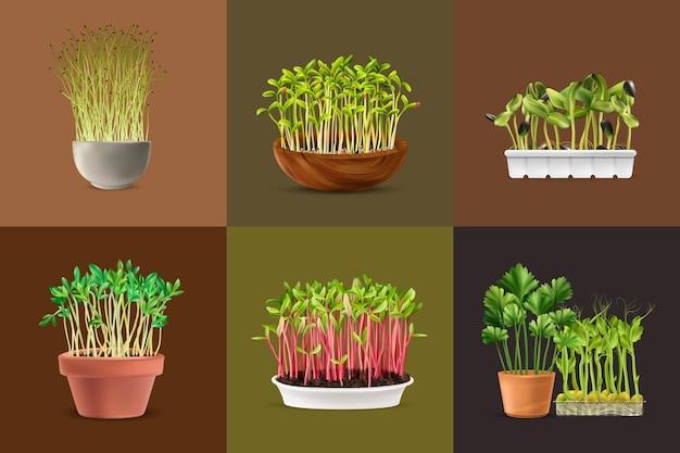 Conjunto de cuadrados de microgreens de nutrición saludable realista aislado