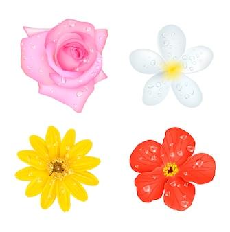 Conjunto de cuatro flores con gotas