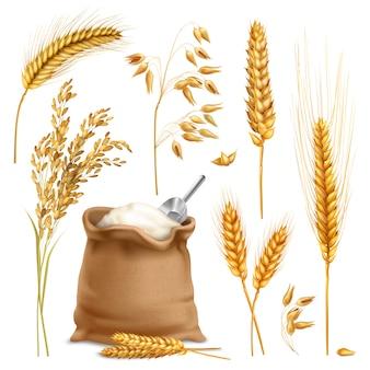 Conjunto de cultivos agrícolas realistas