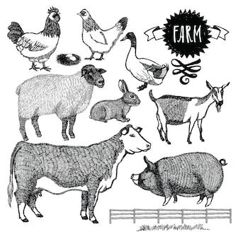 Conjunto de animales de granja orgánica