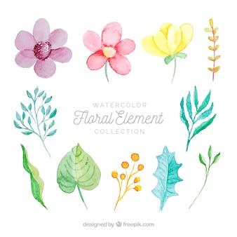Conjunto de elementos florales en acuarela