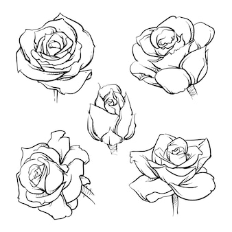 Conjunto de esquema de flores rosa.