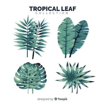Conjunto de hojas tropicales con diseño plano
