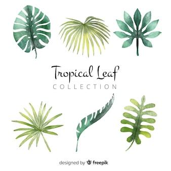 Conjunto de hojas tropicales en acuarela