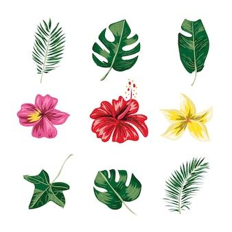 Conjunto de hojas y flores tropicales.