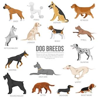 Conjunto de raza de perros