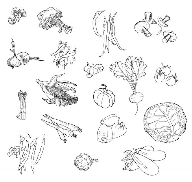 Conjunto de verduras a mano para su diseño.