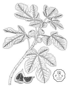 Conjunto decorativo de frutas de dibujo vectorial.