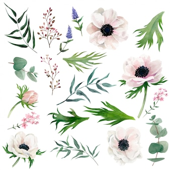 Conjunto de delicadas anémonas de acuarela, hojas, bayas y otros productos botánicos.