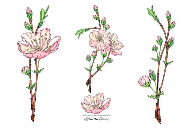 Conjunto con delicadas flores, rama floreciente