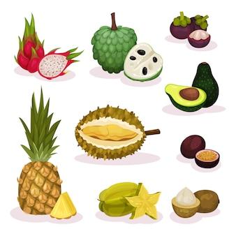 Conjunto detallado de diferentes frutas exóticas. producto natural. comida orgánica y sabrosa. nutrición vegetariana