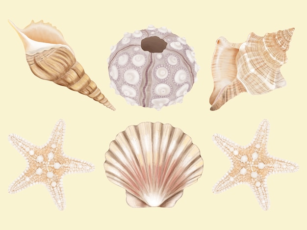 Conjunto dibujado a mano de concha de mar