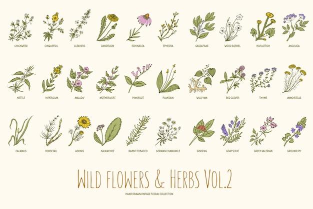 Conjunto de dibujado a mano flores y hierbas silvestres