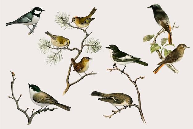 Conjunto de dibujado a mano de vector de pájaro vintage