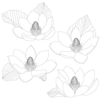 Conjunto de dibujo de flores de magnolia aislado en blanco