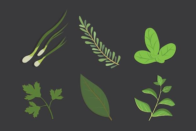 Conjunto de dibujo de hierbas y flores, vector. especias aisladas. ilustración de hierbas.