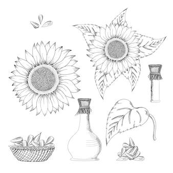 Conjunto de dibujo vectorial de semillas y flores de girasol