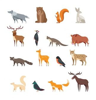 Conjunto de dibujos animados de animales y aves silvestres de bosque aislado.