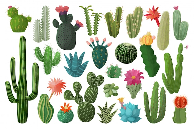 Conjunto de dibujos animados de cactus aislado icono. ilustración de cactus mexicanos sobre fondo blanco. conjunto de dibujos animados icono cactus con flor.