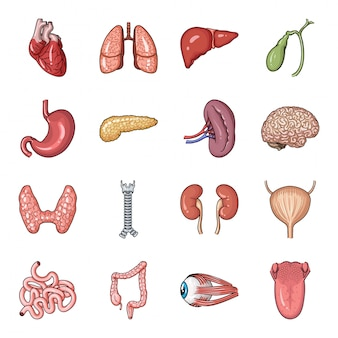 Conjunto de dibujos animados de órganos humanos icono. conjunto de dibujos animados de cuerpo aislado anatomía icono. ilustración órgano humano.
