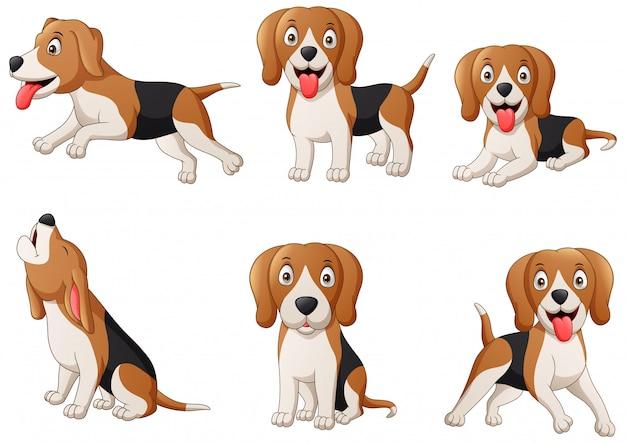 Conjunto de dibujos animados de perro beagle. ilustración