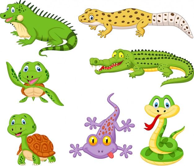 Conjunto de dibujos animados de reptiles y anfibios.