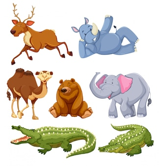 Conjunto de diferentes animales