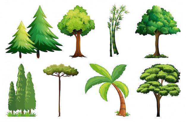 Conjunto de diferentes árboles