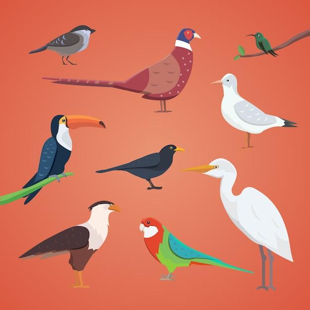 Conjunto de diferentes aves aisladas. colección de pájaros de dibujos animados