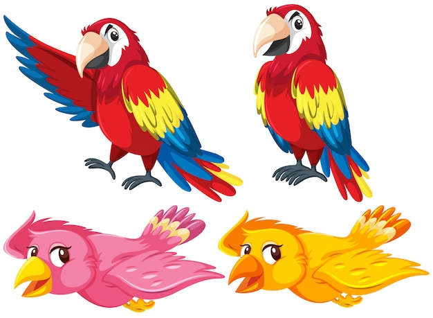 Conjunto de diferentes aves