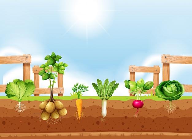Conjunto de diferentes cultivos de hortalizas