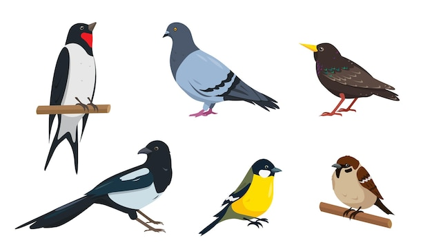 Conjunto de diferentes diseños de ilustraciones de aves de la ciudad sobre fondo blanco.