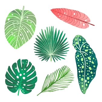 Conjunto de diferentes hojas tropicales
