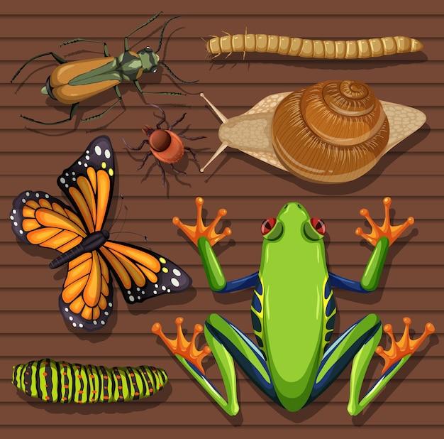 Conjunto de diferentes insectos sobre fondo de papel tapiz de madera