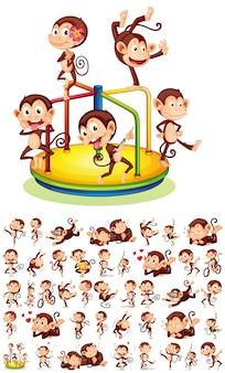 Conjunto de diferentes monos