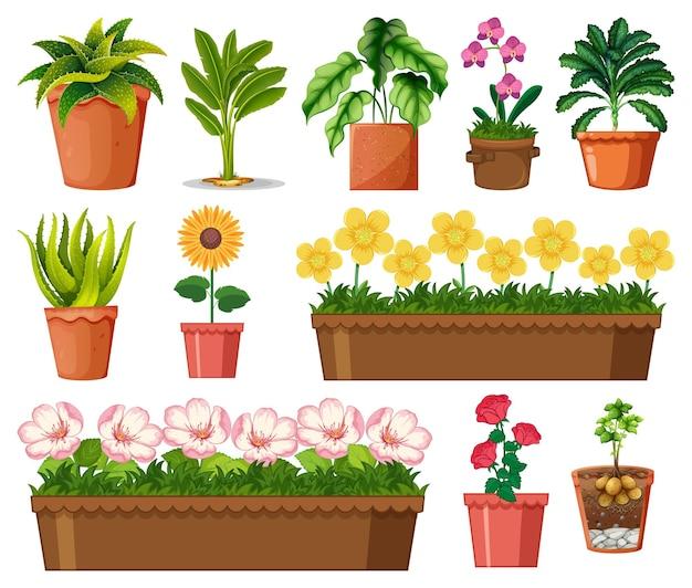 Conjunto de diferentes plantas en macetas aislado sobre fondo blanco.