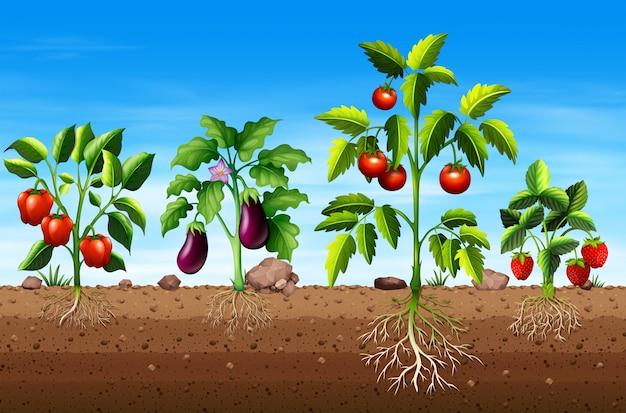 Conjunto de diferentes plantas de vegetales y frutas