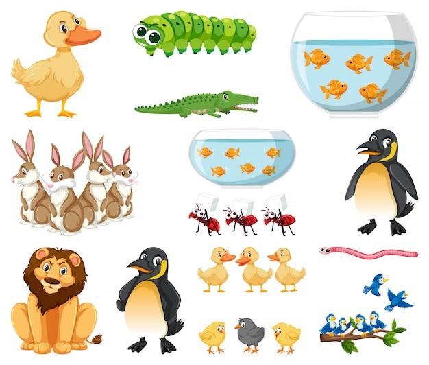 Conjunto de diferentes tipos de animales sobre fondo blanco.