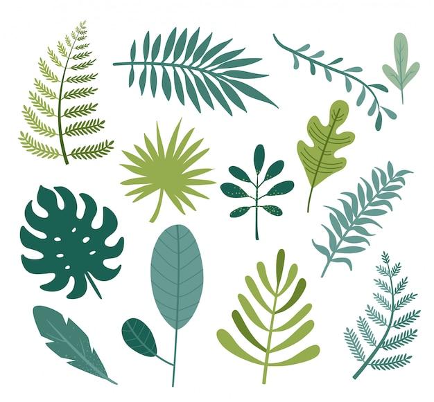 Conjunto de diferentes tropicales y otras hojas verdes aisladas.