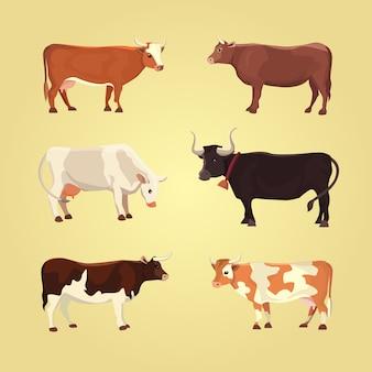 Conjunto de diferentes vacas, aislado. ilustración vectorial