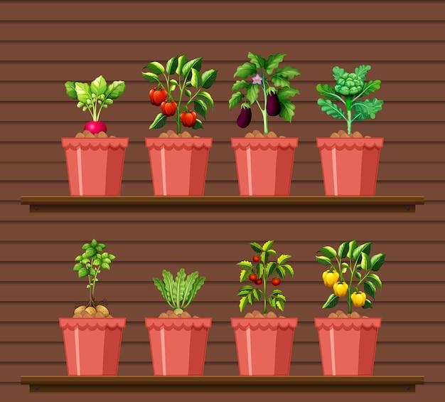 Conjunto de diferentes verduras en maceta diferente en estante de pared de madera