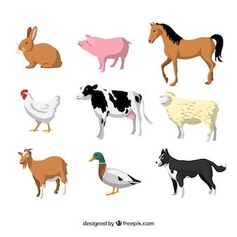 Conjunto con diseño plano de animales domésticos