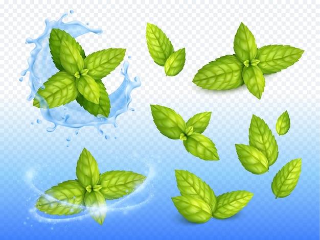 Conjunto de diseño realista de menta de hojas verdes maduras en gotas de agua con gas con trazado de recorte de flores frescas
