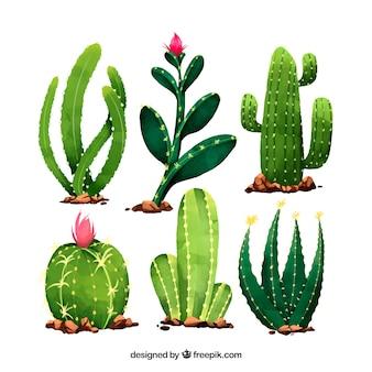 Conjunto divertido de cactus con estilo de acuarela