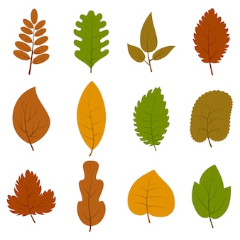 Conjunto de doce hojas de otoño diferentes aisladas sobre fondo blanco. ilustración vectorial.